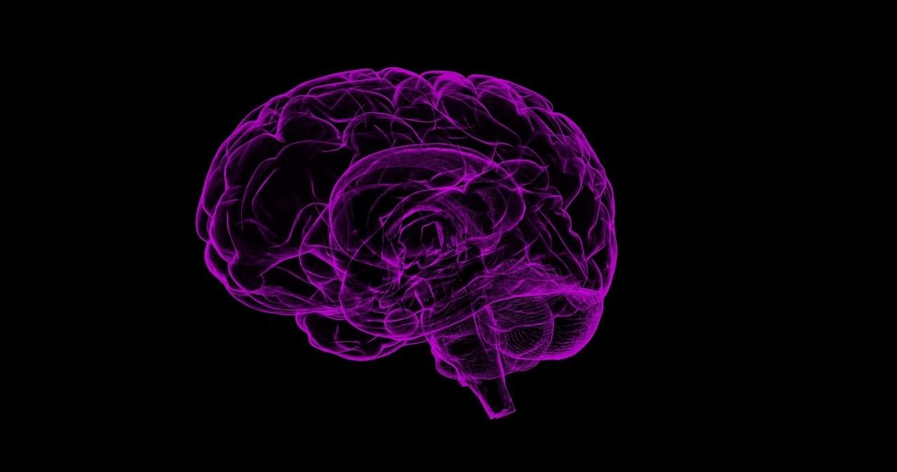 orgazm mózgu