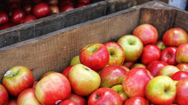dieta jablkowa